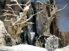 tn_1200_colorado20oj20icey20trees-jpg